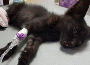 Полиция:котенка в Краснодаре убил шестилетний мальчик