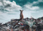На Кубани запустили флешмоб по сокращению мусорных отходов