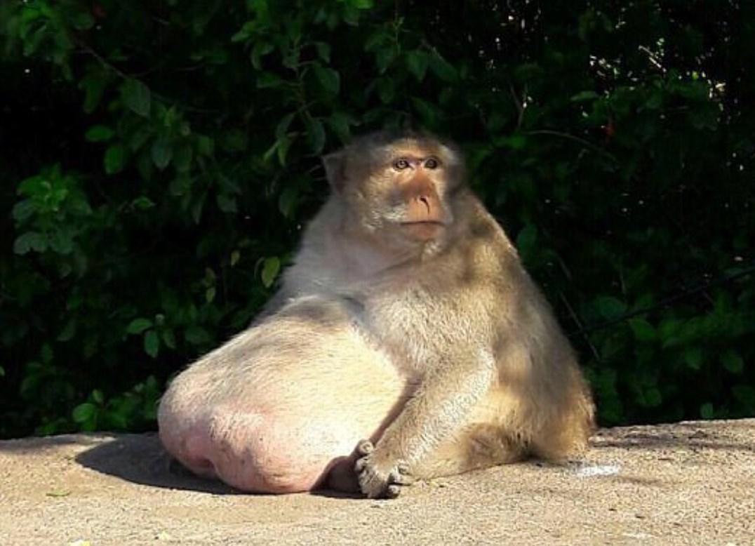 самая толстая в мире