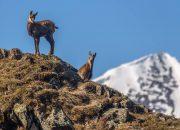 Более 50% туристов встретили в Кавказском заповеднике диких животных