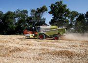 На Кубани урожай зерновых культур превысил 6,4 млн тонн