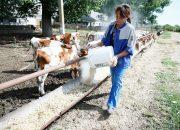 На Кубани на грантовую поддержку сельхозкооперативов направили 220 млн рублей