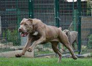 В России 12 пород собак официально признали опасными