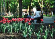 На благоустройство станичного парка в Ейском районе выделили 26,9 млн рублей