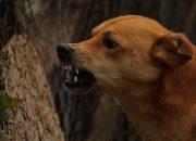 На Кубани бродячая собака напала на девятилетнего мальчика