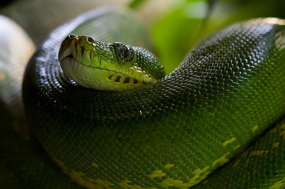 пауки змеи
