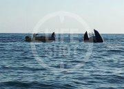 На борту перевернувшегося катамарана в Черном море находились 55 человек