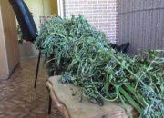 В Краснодарском крае орудовали пожилые наркодилеры