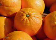 В порту Новороссийска задержали 27 тонн зараженных апельсинов из Египта