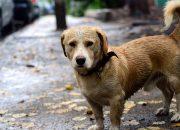 В Сочи на помощь бродячим животным планируют выделить 3 млн рублей