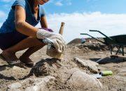 В Анапе пройдет неделя археологии