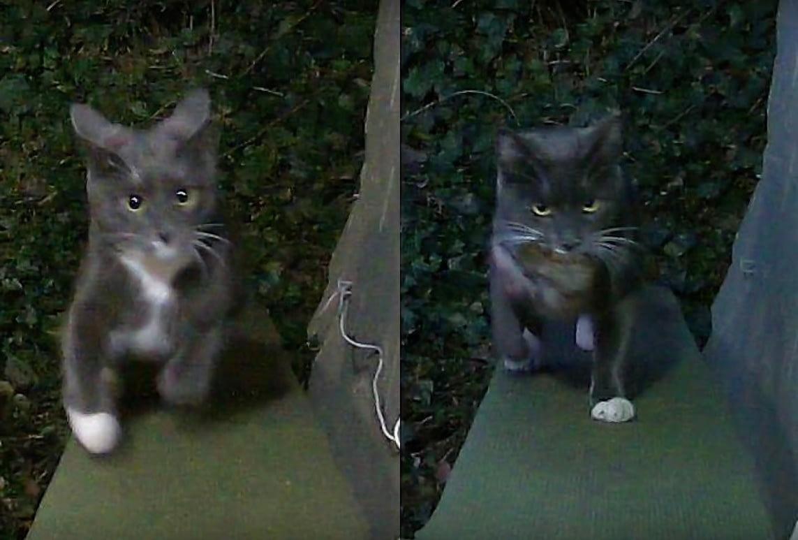 Инженер научил искусственный интеллект не пускать в дом кота с добычей