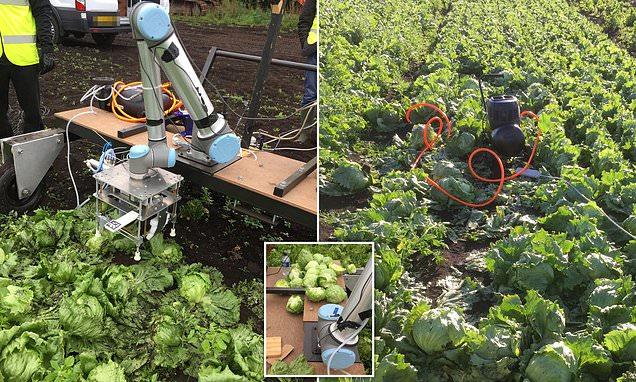 Робот сбор урожая
