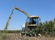 На Кубани 40 млн рублей направят на поддержку элитного семеноводства