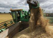 На Кубани 90% зерна нового урожая — пшеница высокого класса