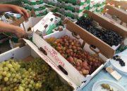 В Темрюкском районе стартовал фестиваль «Тамань хлебосольная»