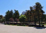 В Краснодаре в сквере «Пограничников» высадят 70 деревьев и более 3 тыс. кустов