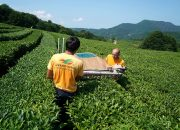 Кубанские чаеводы получили награды на конкурсе в Великобритании