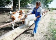 На Кубани сельхозпроизводителям с начала года выделили 3,2 млрд рублей субсидий