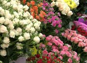 Россияне стали меньше покупать цветов к 1 сентября