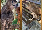 В Анапе у фотографов-живодеров изъяли орла и ястреба