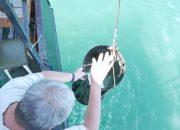 В Анапе экологи начали исследование побережья Черного моря