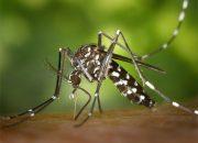 В Роспотребнадзоре опровергли информацию об эпидемии лихорадки Нила на Кубани