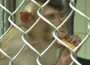 В Сочи в НИИ медицинской приматологии появились новые виды обезьян
