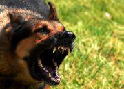 В Новороссийске собаки покусали двоих детей