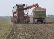 В Кореновском районе аграрии убрали 1 тыс. га сахарной свеклы