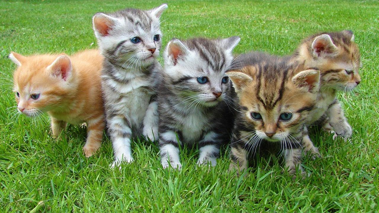 клонированные котята