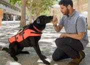 Собачья телепатия: это устройство позволит командовать псом молча