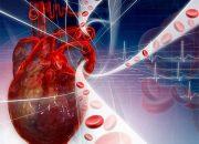 На Кубани снизилась смертность от болезней системы кровообращения