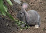 В Ейском районе фермер обучил кроликов работать на грядке