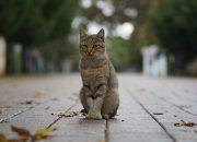 Жители России больше полюбили беспородных кошек и собак