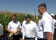 Ладожский гибрид кукурузы оценили на Дне поля Юга России