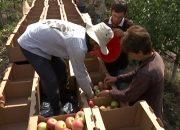 Андрей Коробка: Кубань компенсирует объем запрещенных на ввоз из Китая фруктов