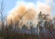 На Кубани из-за жары почти в 40 °С объявили экстренное предупреждение