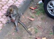 «Вы что такие наглые?» — на Ольгу Бузову на Бали напала обезьяна
