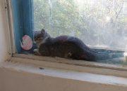 В Новороссийске спасли кошку, которая застряла между оконными рамами