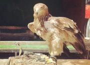 В Сочи в районе Красной Поляны у фотографов изъяли степного орла
