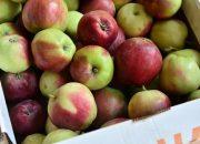 На Кубани урожай фруктов и ягод превысил 76 тыс. тонн