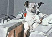 Животные, побывавшие в космосе: Белка и Стрелка, кошка Фелисетта и шимпанзе Хэм