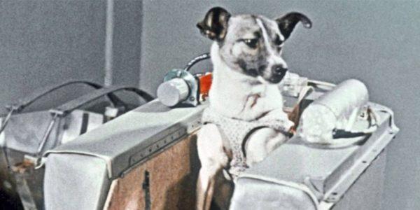 Белка и Стрелка, кошка Фелисетта и шимпанзе Хэм: животные, побывавшие в космосе