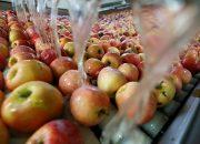 Кубанская продукция заменит на прилавках запрещенные к ввозу китайские фрукты