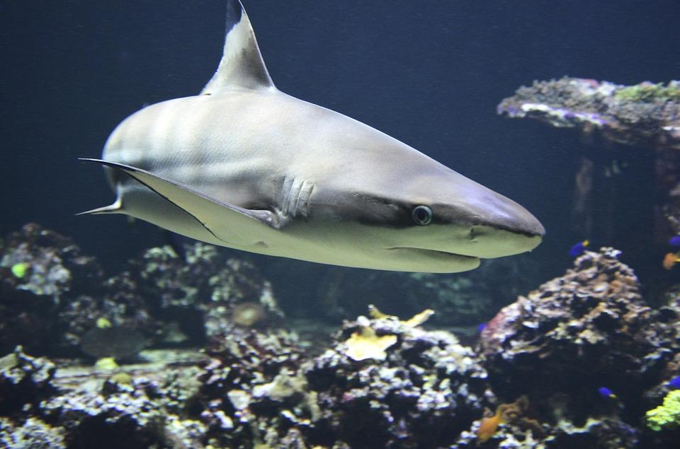 Спастись от акулы: как вести себя при нападении хищника