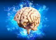 Ученые вырастили и оживили мозг, который пока не может думать