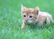 Ученые рассказали, почему кошки иногда едят траву