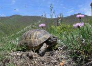 В Новороссийске нашли черепаху с мутацией