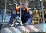 В Новороссийске енот три дня просидел на цементном заводе. Видео